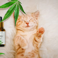 what is cbd oil for cats