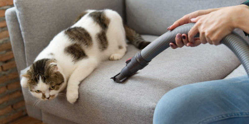 what is the best vacuum for pet hair