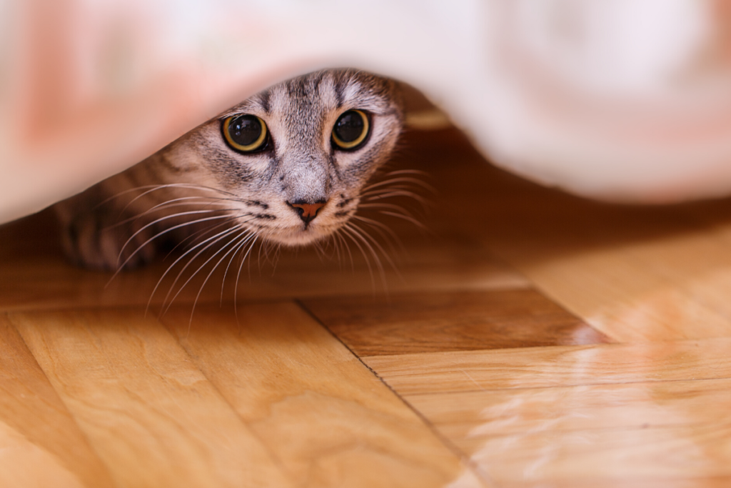 cat hiding under bed showing withdrawn behaviour