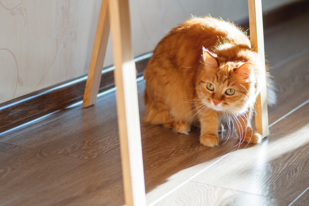 what is a grooming brush-ginger cat hiding