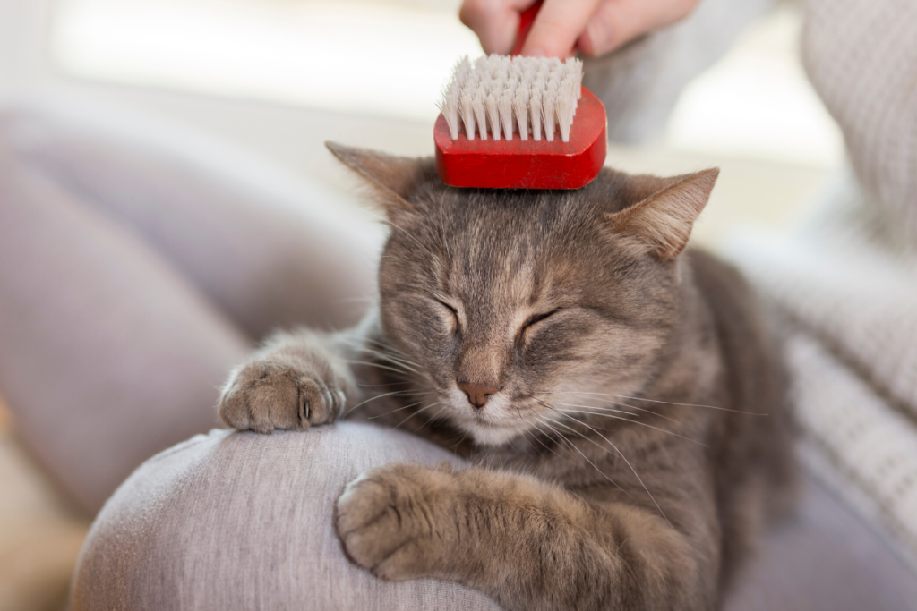 woman brushing tabby cat