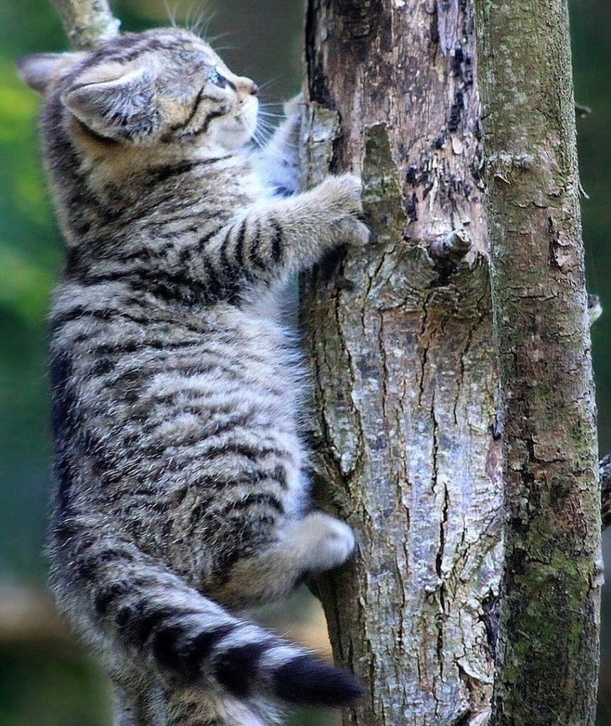 what is cat proof fencing and giving your cat somewhere to climb