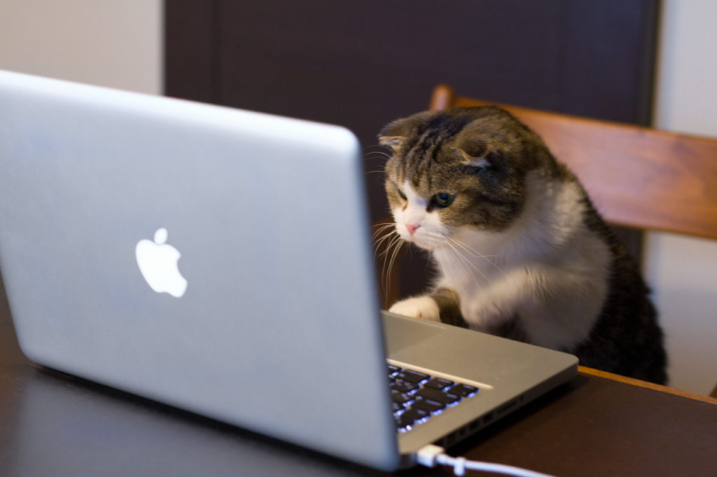 cat looking at laptop screen