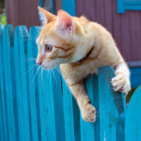 what is cat proof fencing