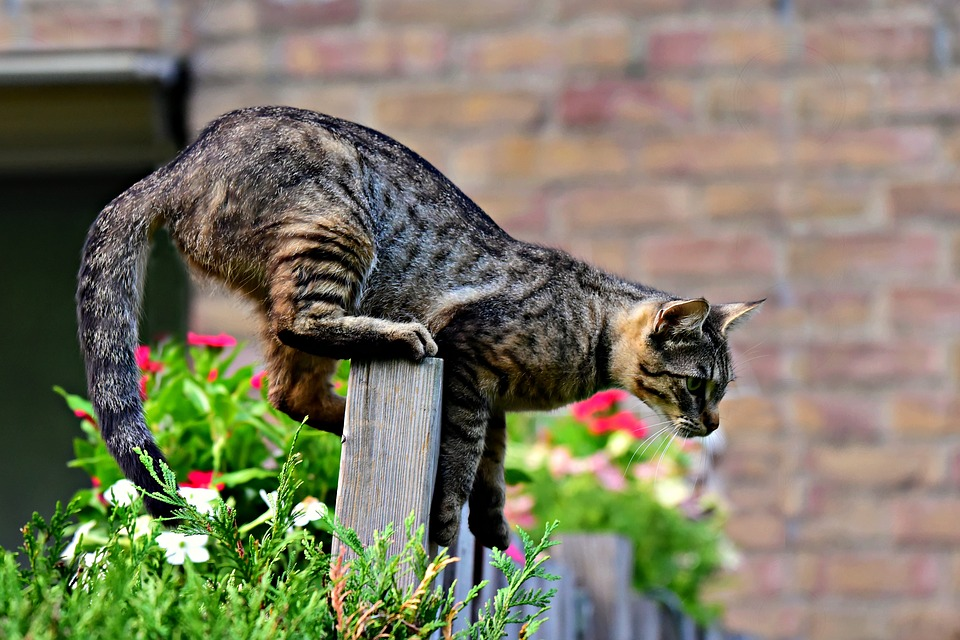 cat jumping over fence