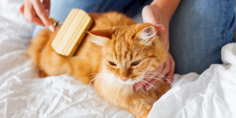 what is the best brush for long haired cats