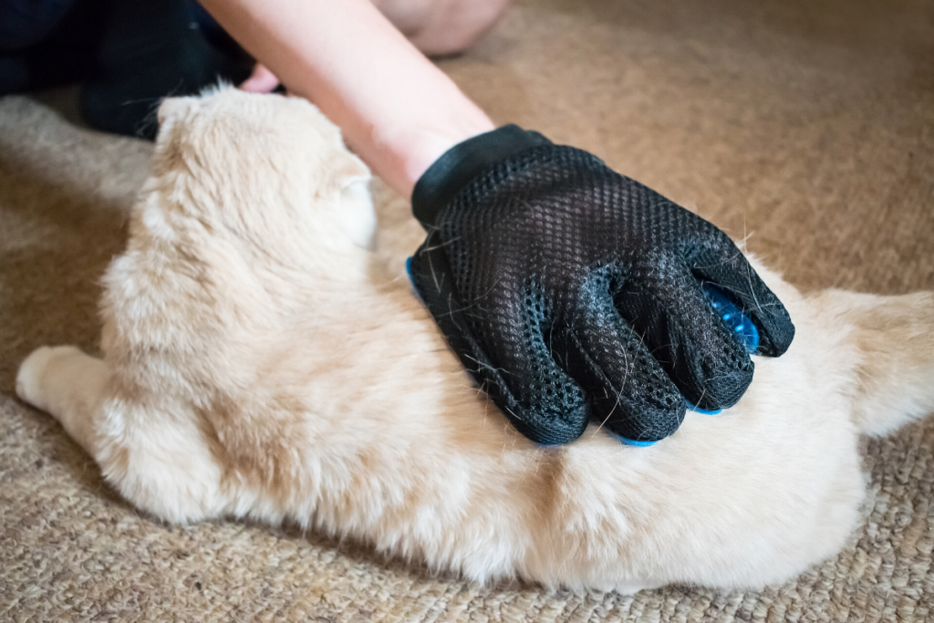 woman brushing her cat with grooming glove