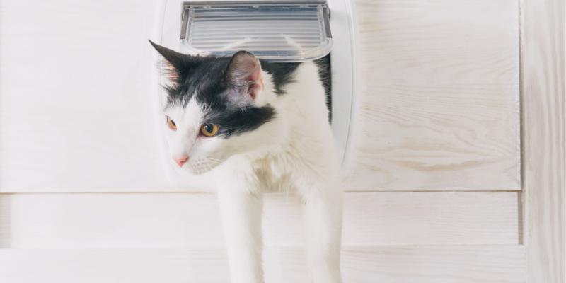 best cat door