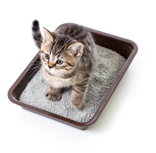 what is the best cat litter. Kitten sitting in litter box