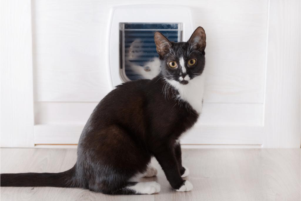 tuxedo cat sitting by pet door