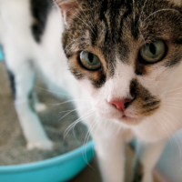 what is the best cat litter