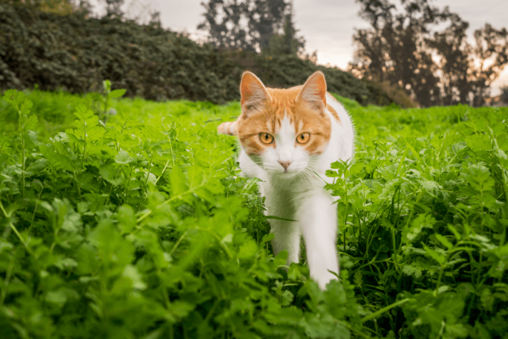 why do cats bring dead animals home- cat stalking