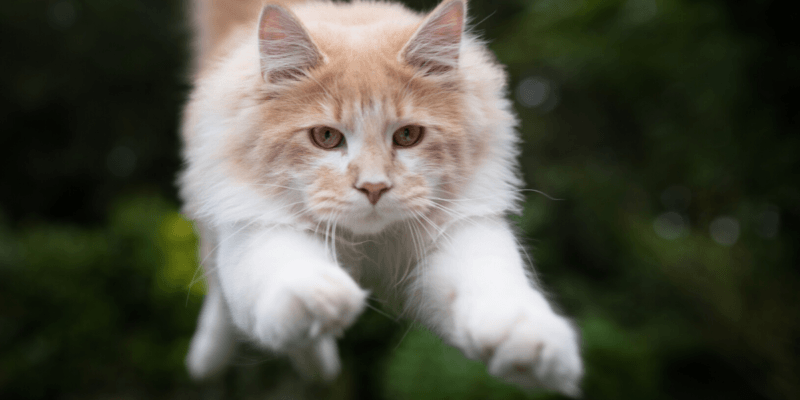 what is cat agility