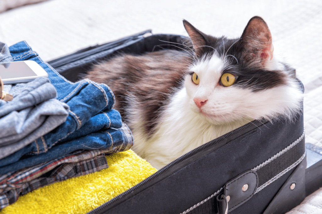 going on vacation can trigger separation anxiety in cats
