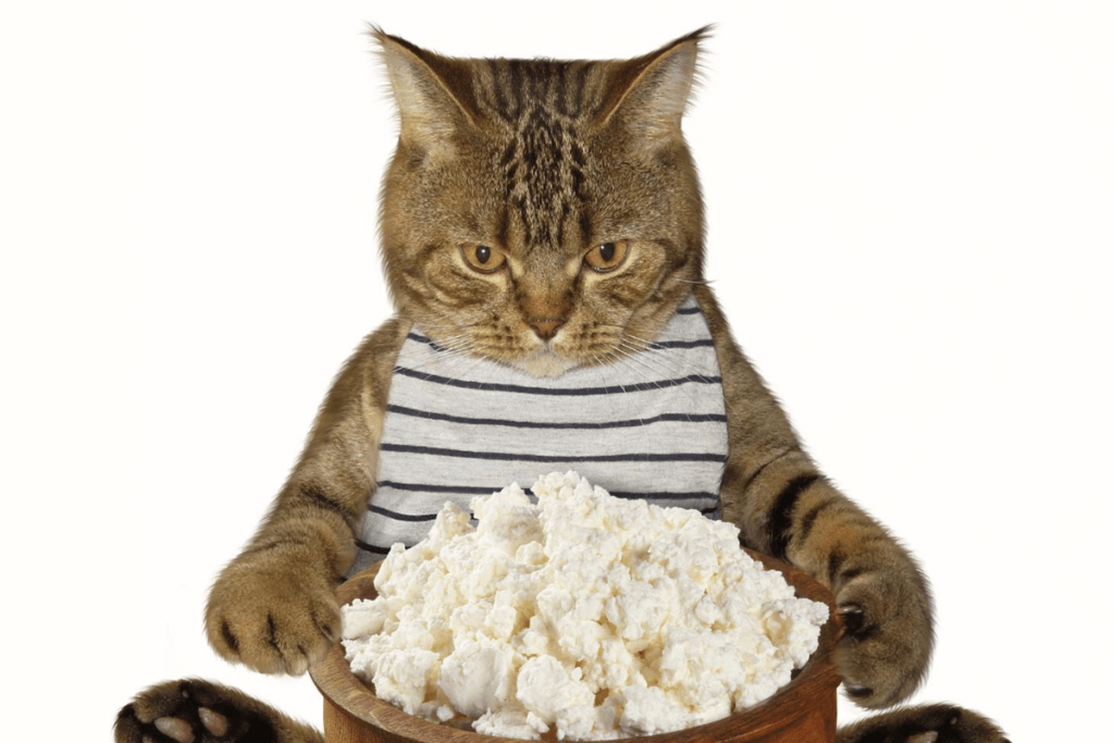 how much cheese is safe for your cat to eat