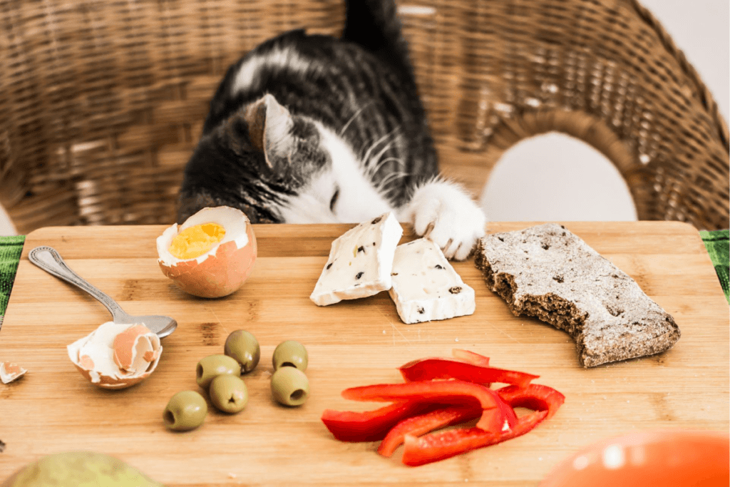 can cats eat cheese and what is safe