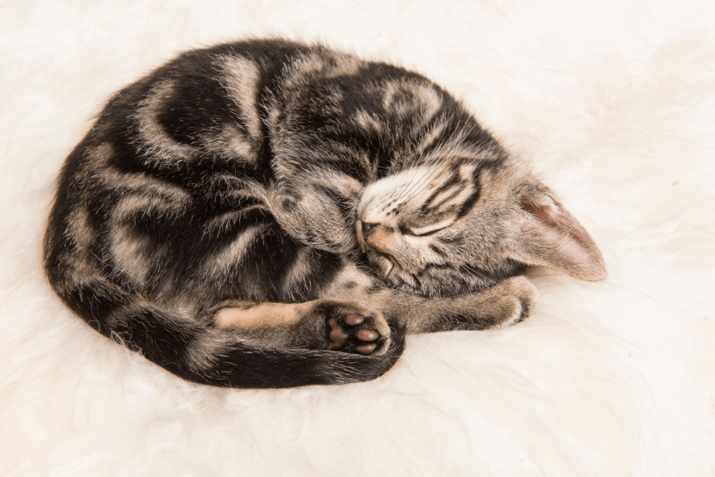 cat curled up asleep