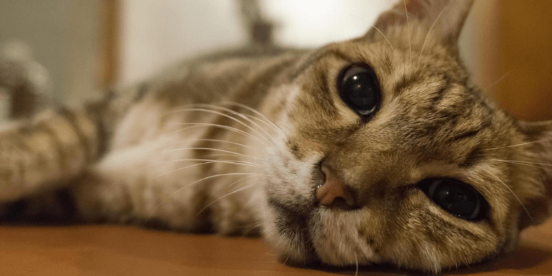 about separation anxiety in cats