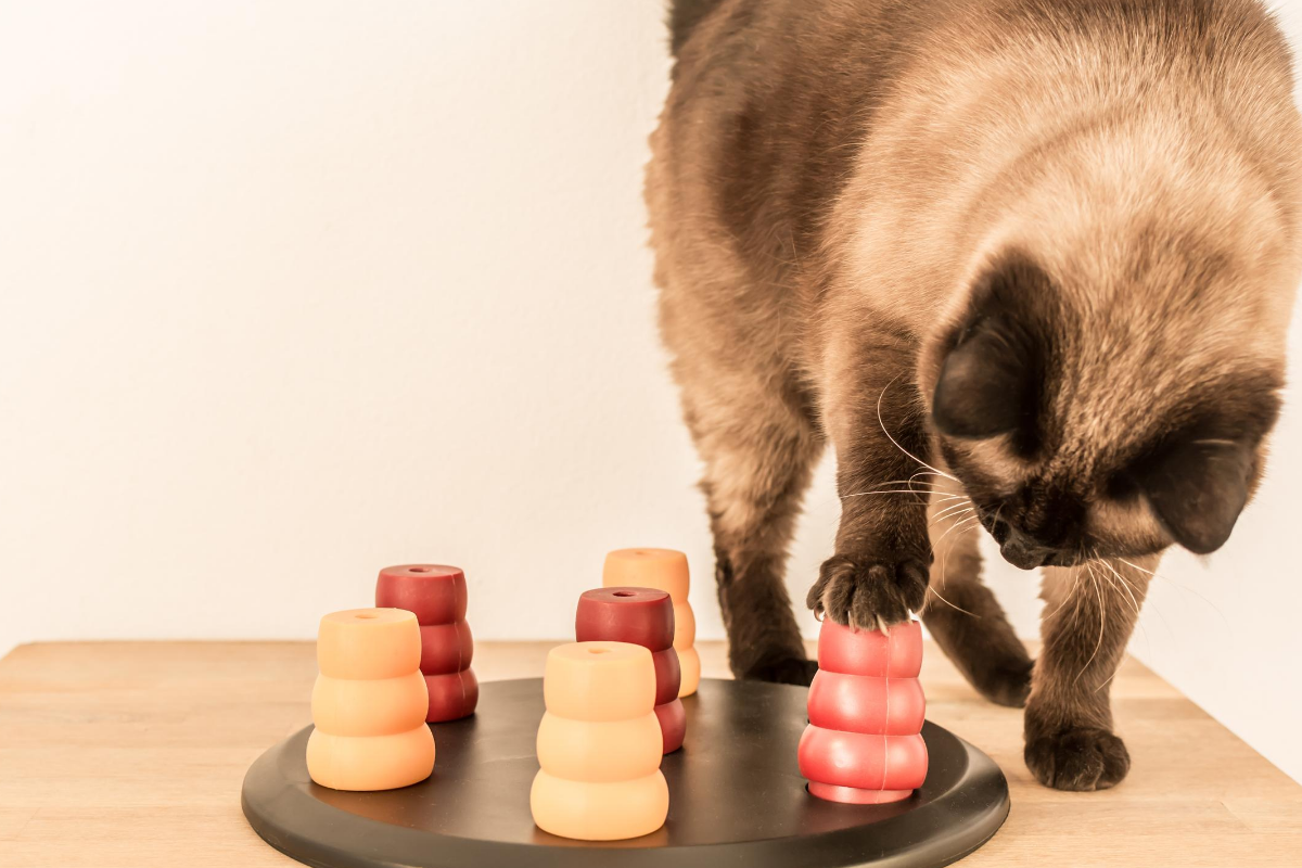 best puzzle toys for cats
