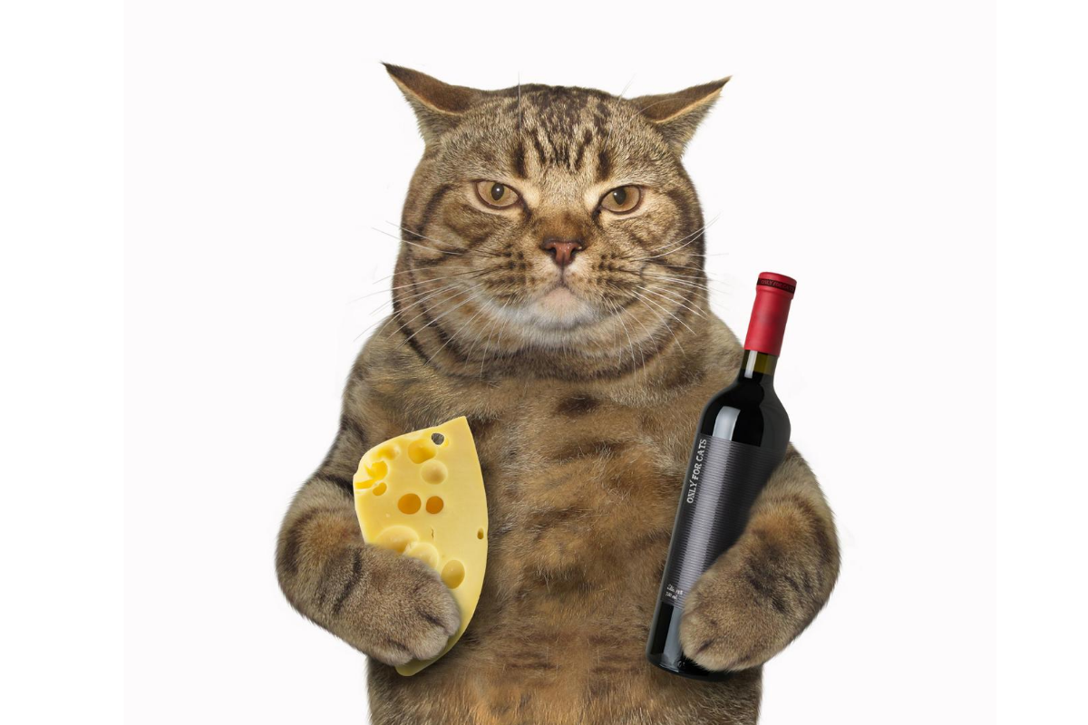 can cats have cheese