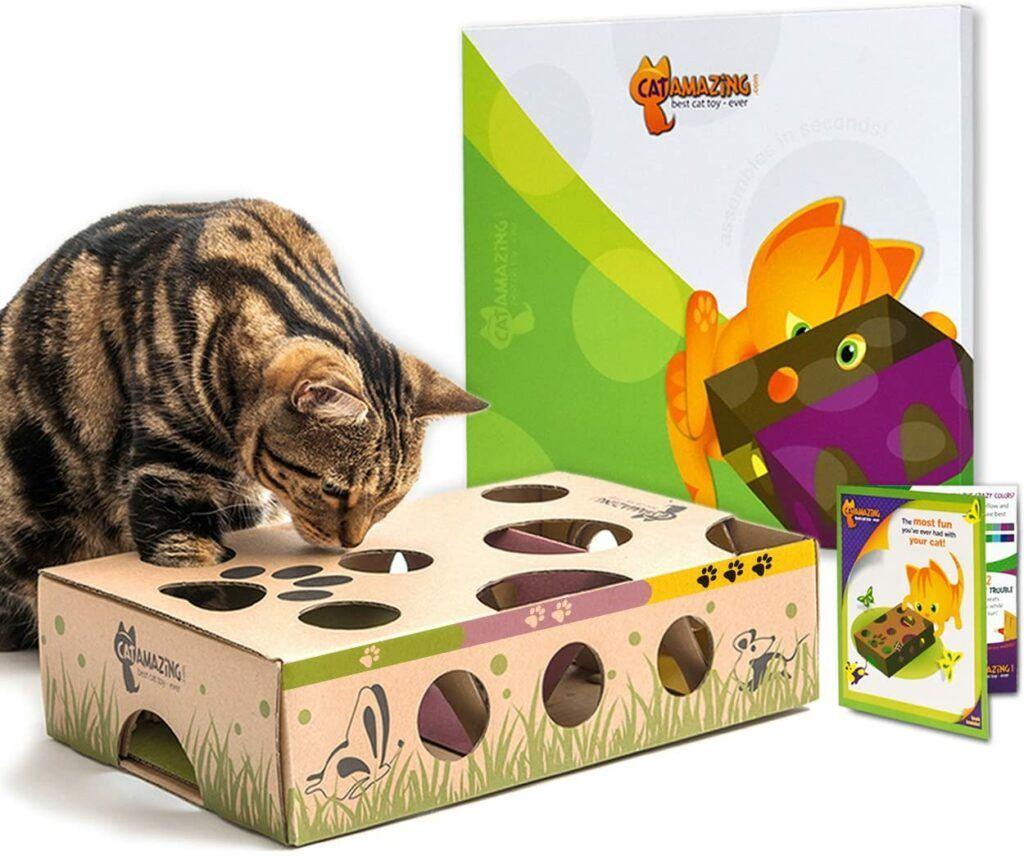 cat amazing best cat toy ever