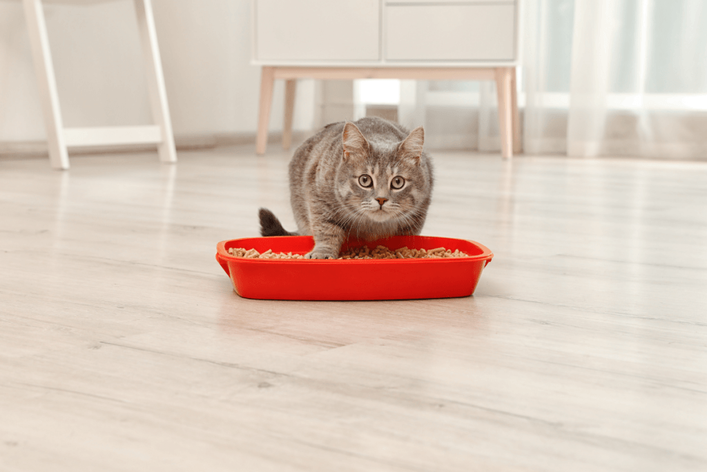 ways your cat asks for help can include urinating outside litter box