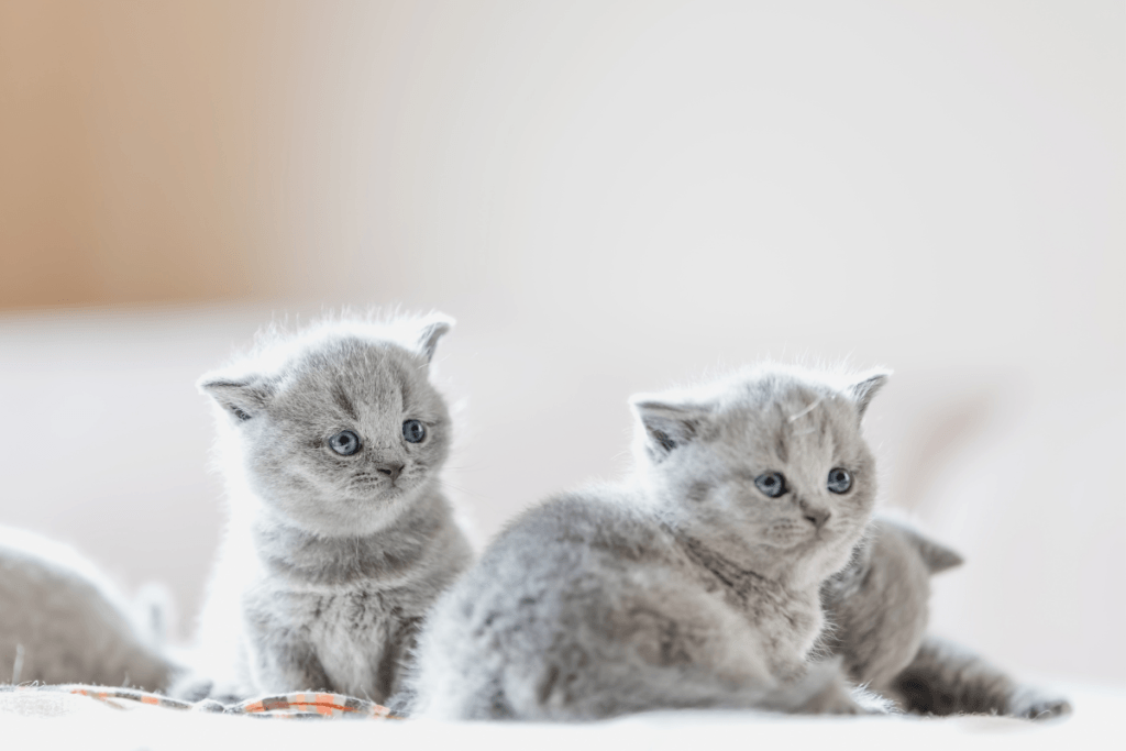 a litter of kittens