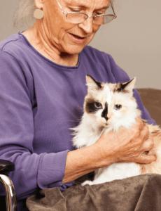 best cat breeds for seniors