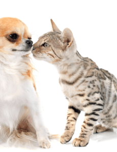 cats that act like dogs