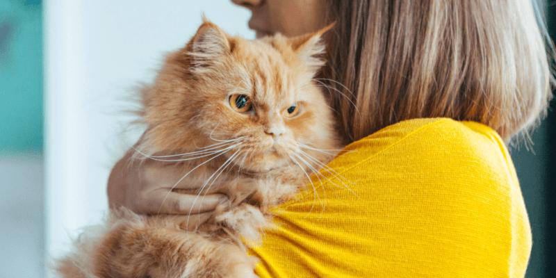 do female cats spray