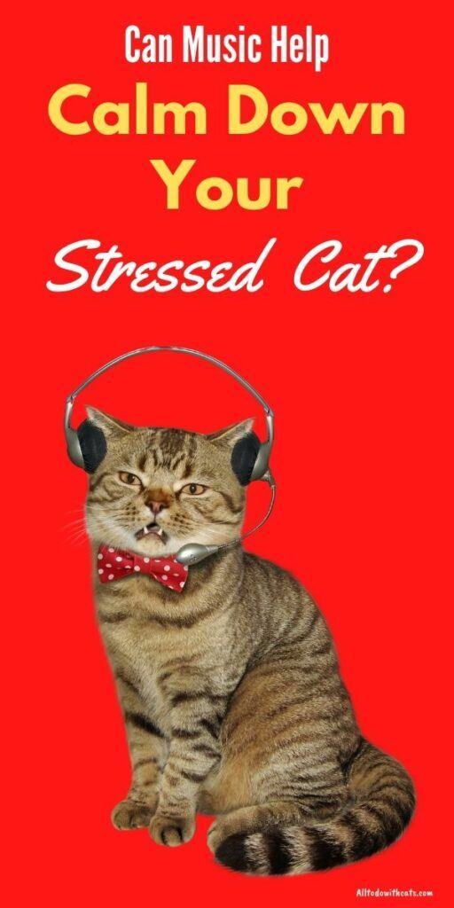 music to calm your cat