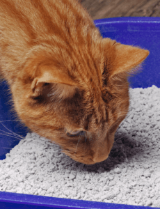 does clumping cat litter work