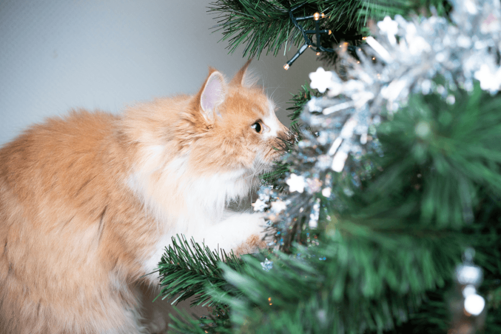 how to cat proof a christmas tree and avoid potential hazards