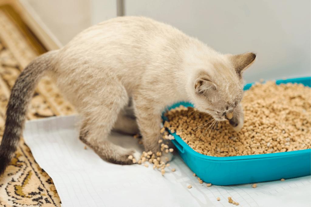 corn clumping cat litter