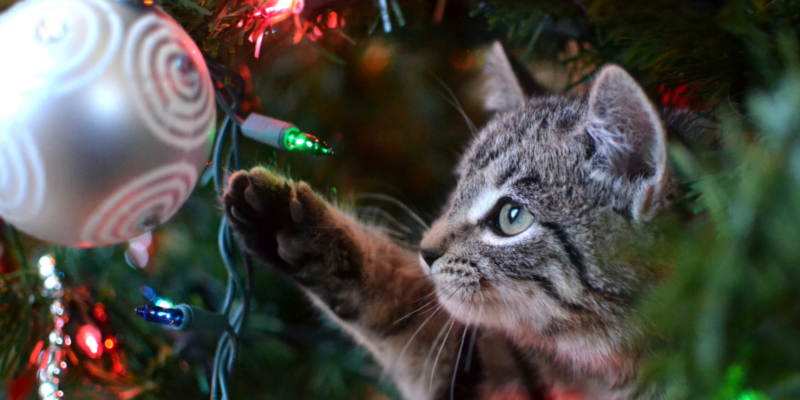 how to cat proof a christmas tree