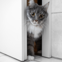 why do cats follow you to the bathroom
