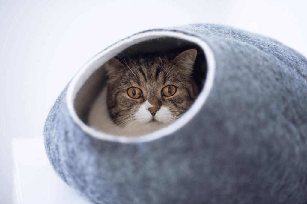 blue igloo cat bed