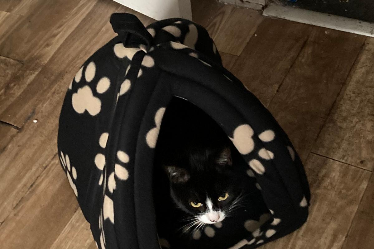 igloo cat beds