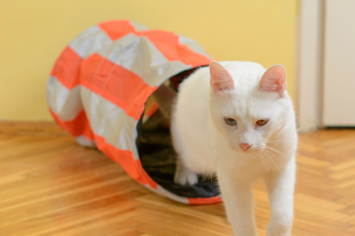 what is a cat tunnel