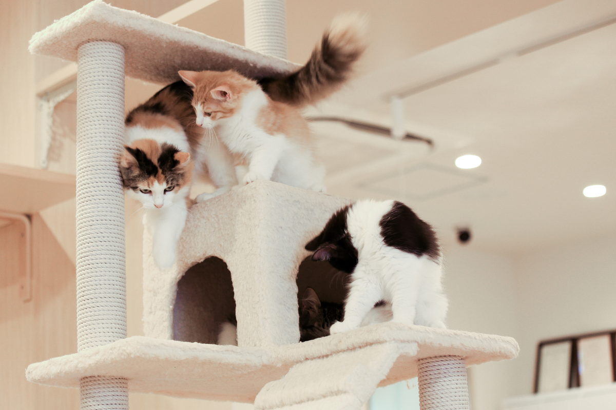 what is the best cat tree