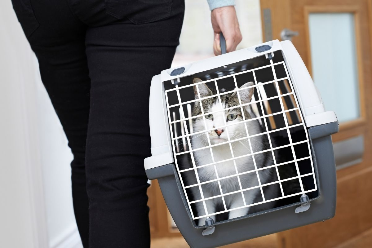 what is the best cat carrier