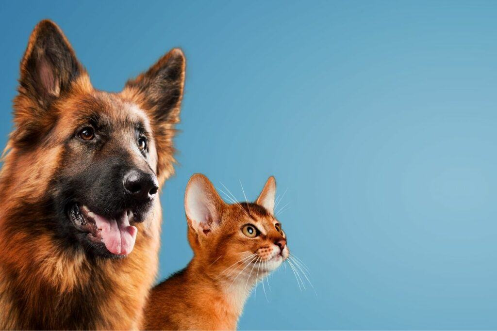 do cats and dogs get along despite being different