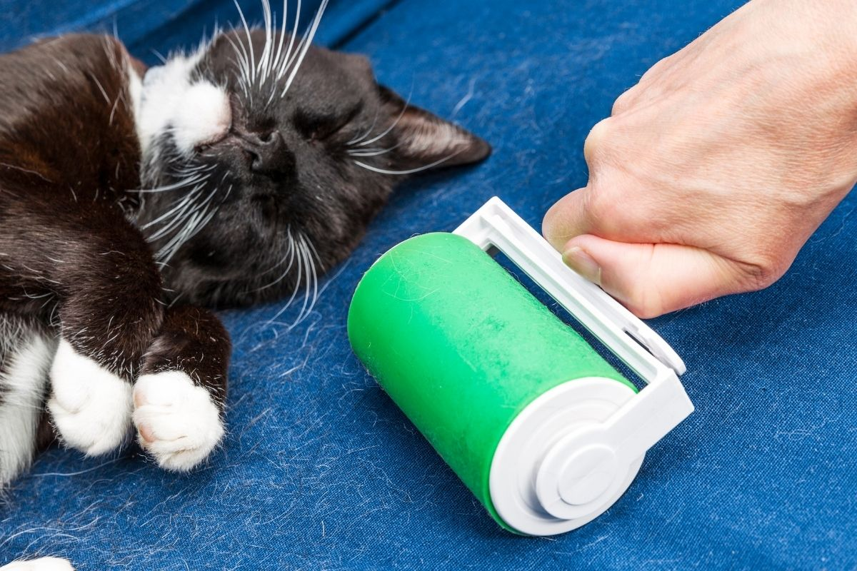 what is the best cat hair remover