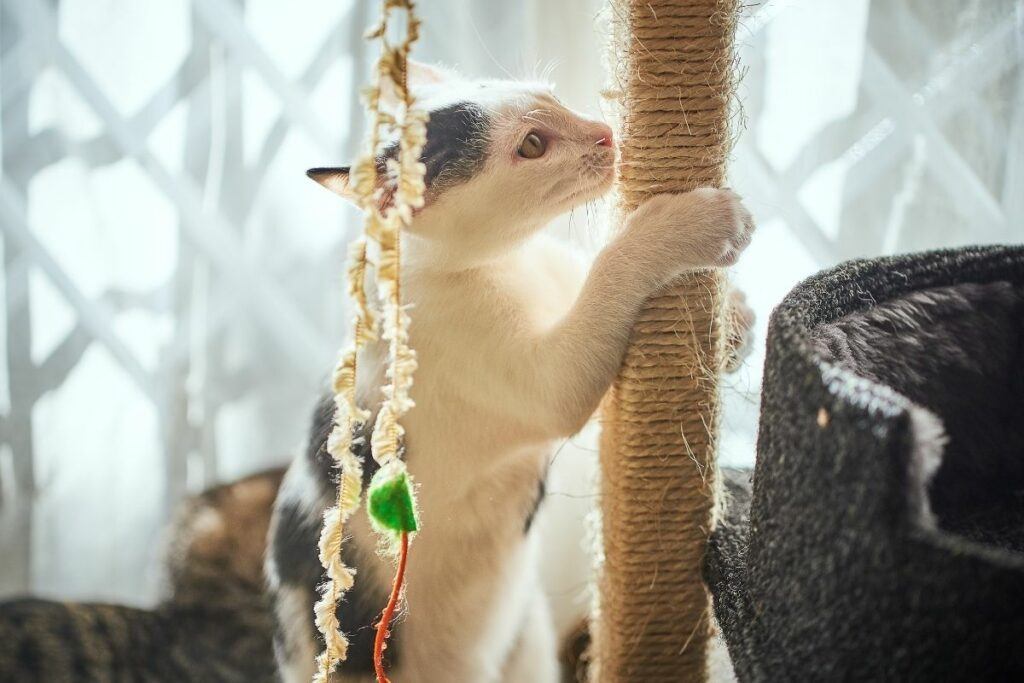 what is the best cat scratching post