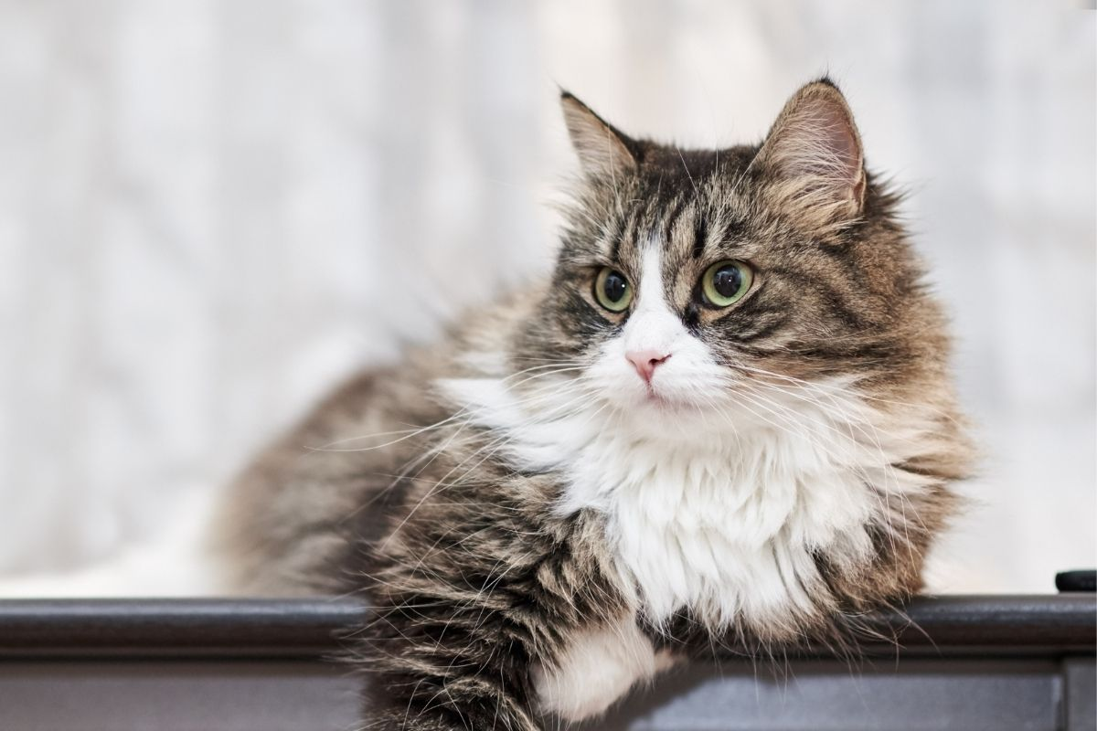 what is worming for cats