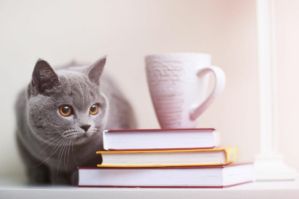 10 reasons why cats are better than dogs includes taking up less space