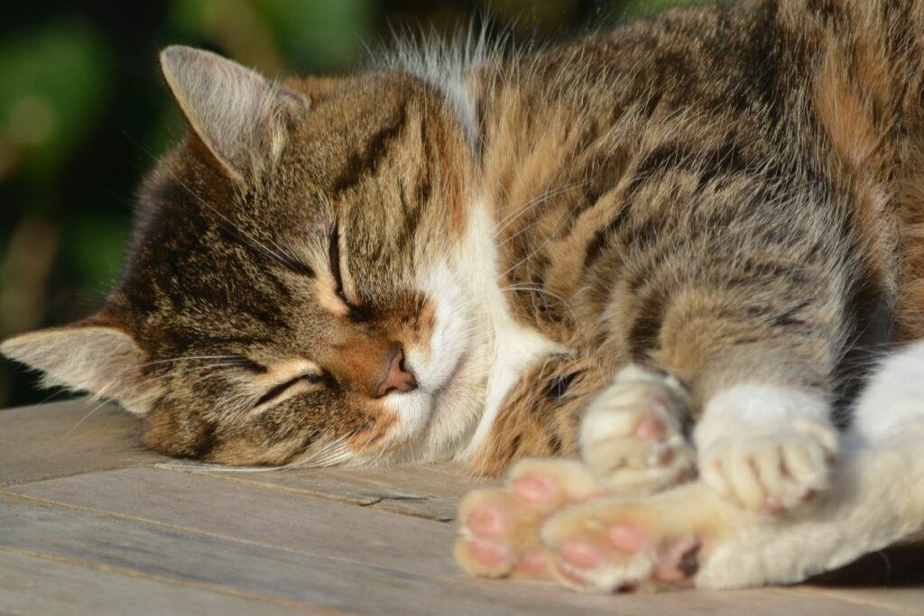 can you worm cats using natural products