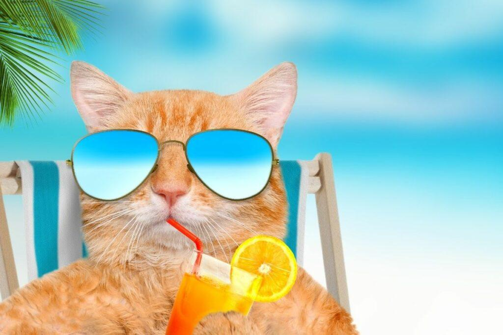 chill paws cbd oil for cats