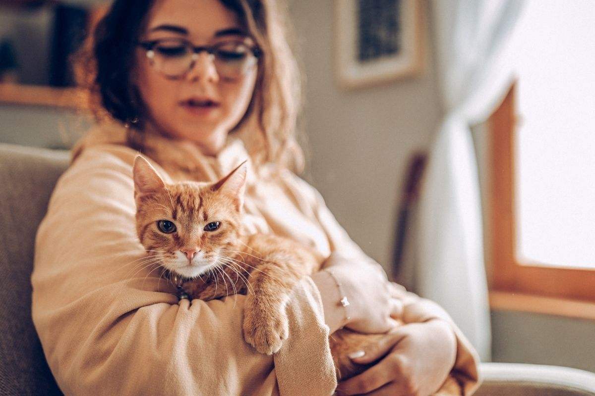 joint pain relief for cats