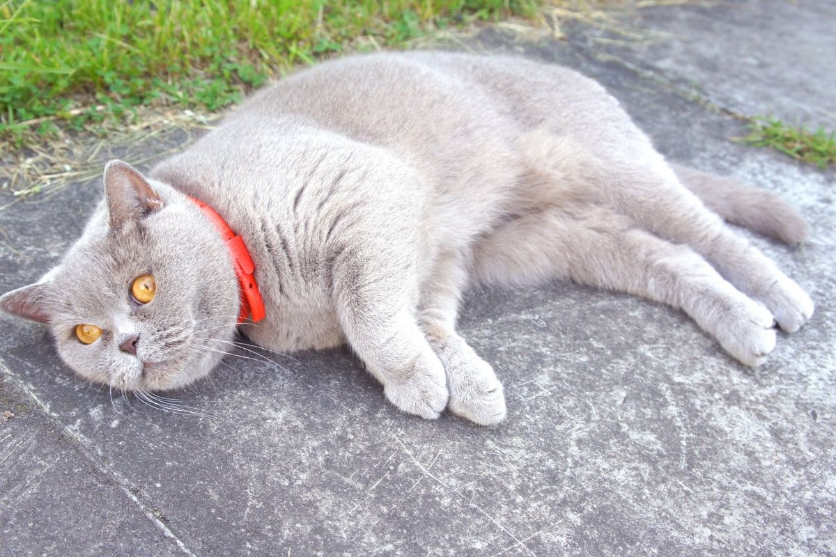 best flea and tick collar for cats